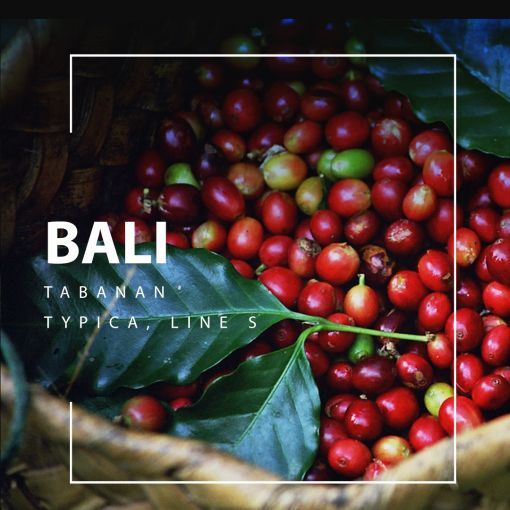 Bali kafija