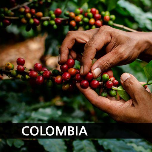 Kolumbija (Colombia Pitalito Macao) kafija, 1 kg