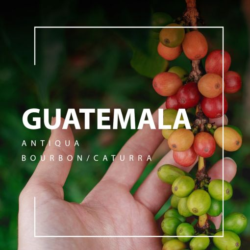 Guatemala (Guatemala) kafija