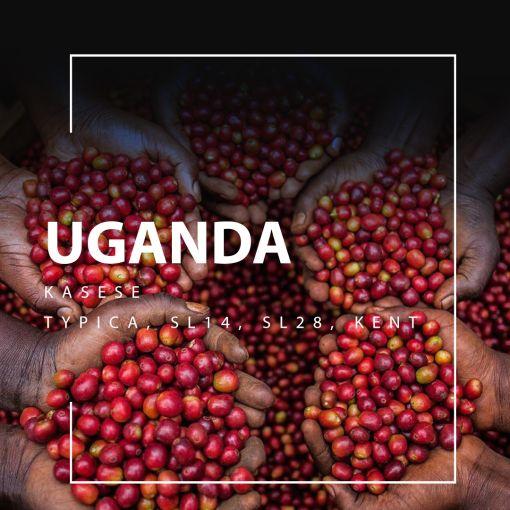 uganda kafija