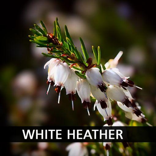 Baltie Viršu Īrisi (White Heather) kafija, 200 g