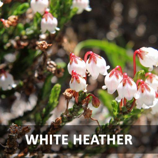 Baltie Viršu Īrisi (White Heather) kafija, 1 kg